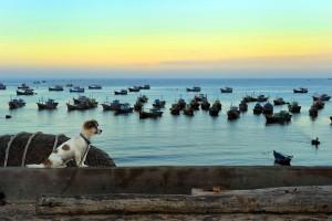 Открытка: Собака и лодки
