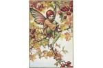 Открытка: Hawthorn Fairy