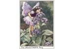 Открытка: Heliotrope Fairy