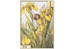 Почтовая открытка Iris Fairy