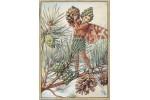 Открытка: Pine Tree Fairy
