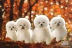 Набор из 16 открыток: Забавные собаки