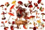 Наборы из 40 прозрачных наклеек: Грибочки