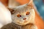 Открытка: Кот с рыжими глазами