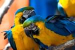 Открытка: Попугаи