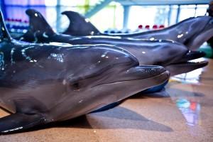 Открытка: Дельфины