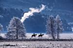 Открытка: Зимняя прогулка на лошадях