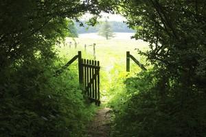Открытка: Калитка между лесом и полем