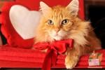 Открытка: Кот с красным бантом