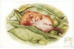 Почтовая открытка: The World of Peter Rabbit - 71