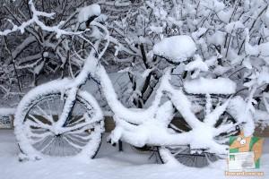 Открытка: Велик в снегу
