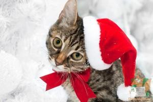 Открытка: Новогодний кот