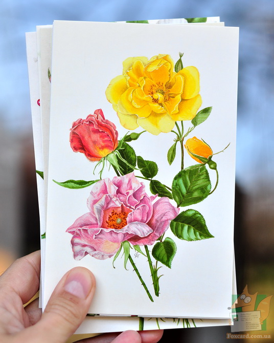 Набор открыток с цветами