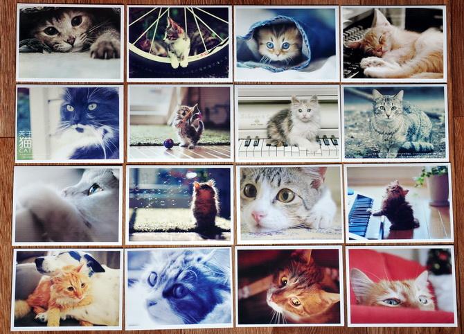 Набор почтовых открыток с кошками