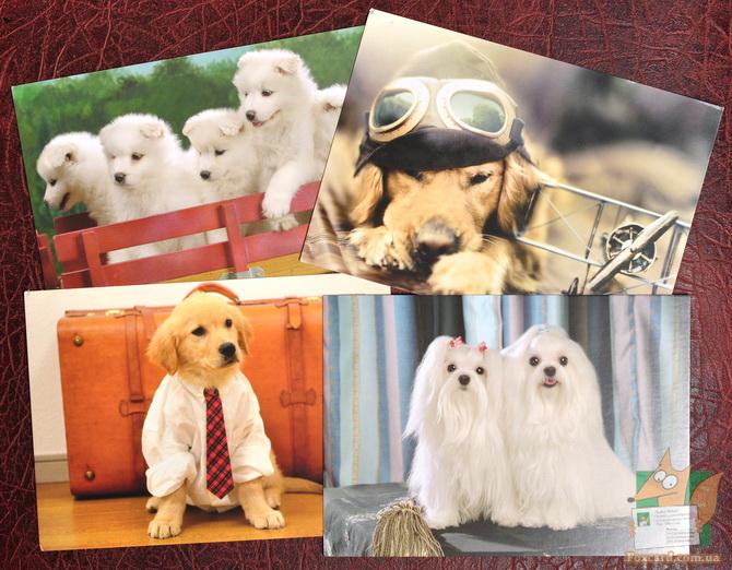 Набор почтовых открыток с забавными собаками