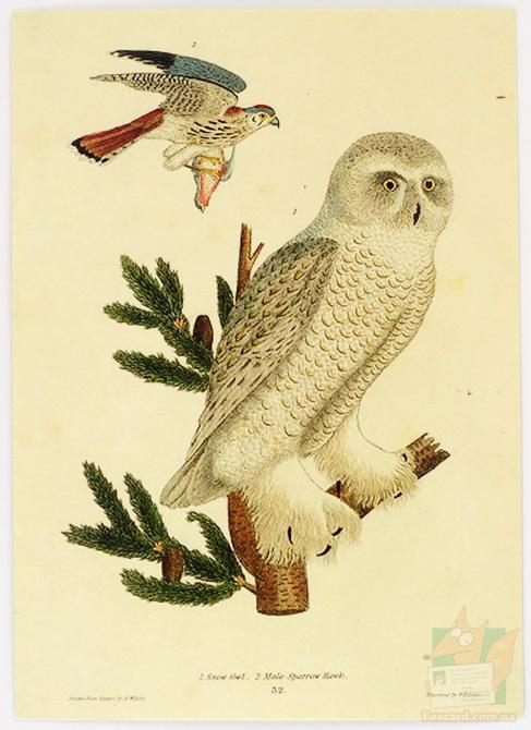 Корейские открытки с птицами