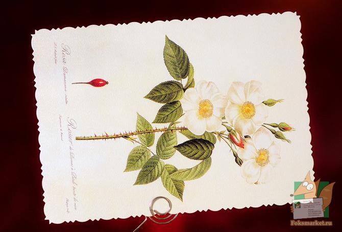 Набор открыток библия роз