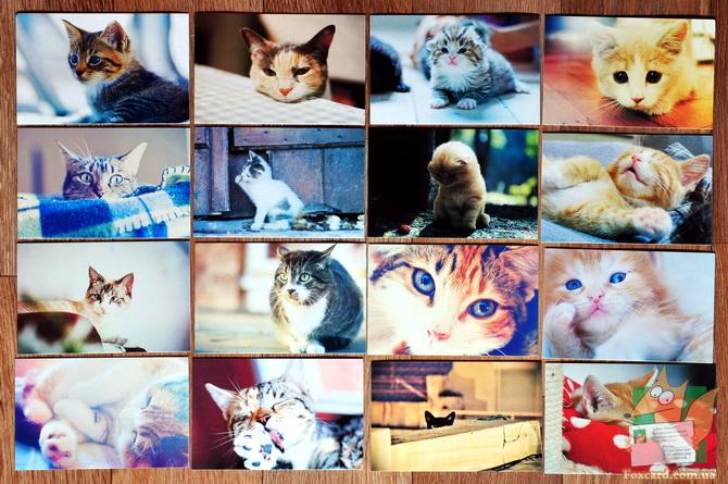 Набор открыток с кошками