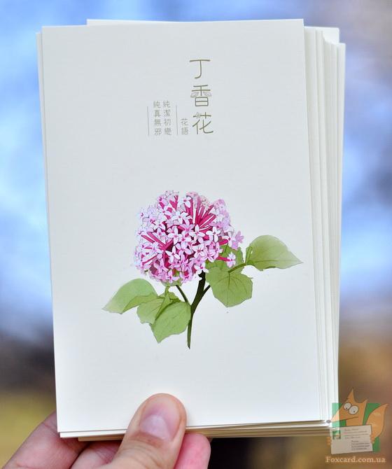 Набор почтовых открыток с цветами Miss Time 002