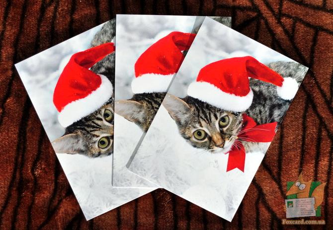 Новогодний кот - почтовая открытка