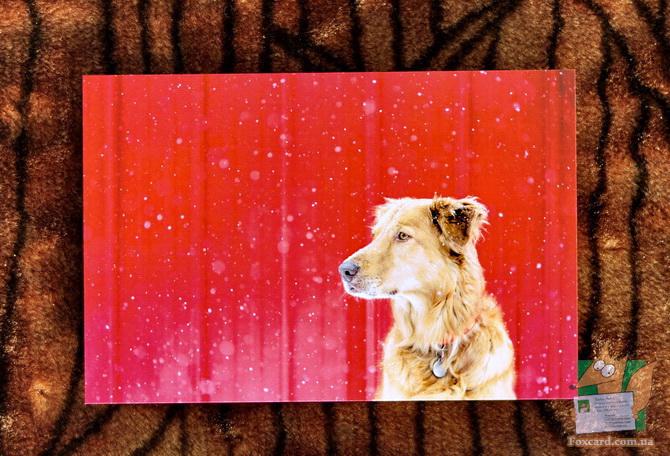Лабрадор зимой, почтовая открытка